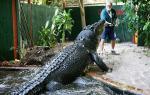 Ένας κροκόδειλος... βαρέων βαρών! Γνωρίστε το γιγαντιαίο ερπετό που ζει με έναν τολμηρό 85χρονο!
